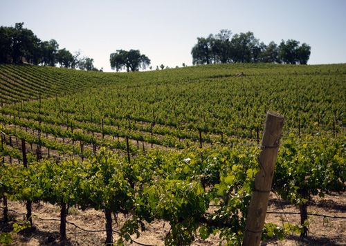 Paso_Robles_Vineyards