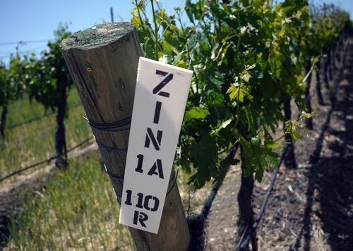 zinfandel_wine_california