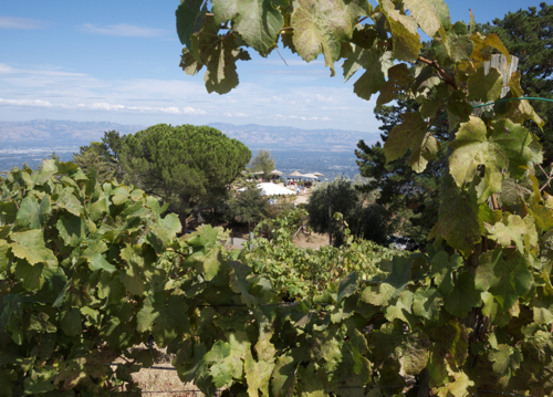 Ridge_Vineyards_Monte_Bello_Estate