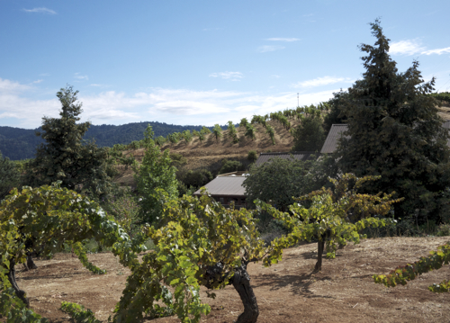 Ridge_Winery