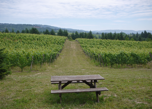 Vineyard_Bench