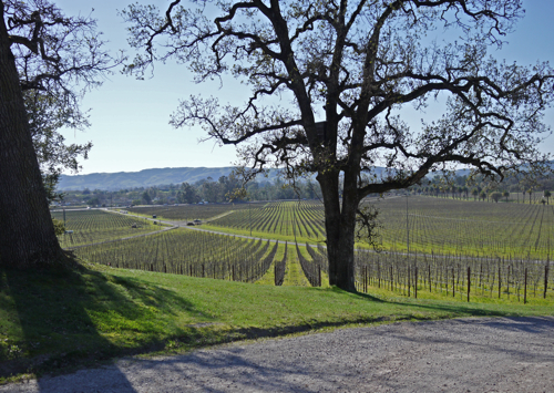 Scribe_Winery_Sonoma