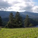 Burgess_Vineyards