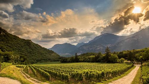 Ferrari_Vineyards_Italy