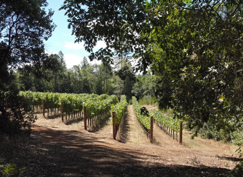 Red_Cap_Vineyards