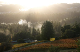 Big-Basin-Vineyards-Estate-Winery